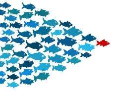 lideranca peixes
